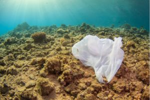 plastic bag on dead coral reef