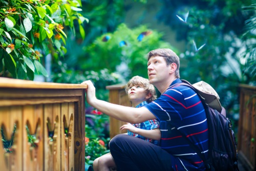 Father and son looking at trees in a botanical garden