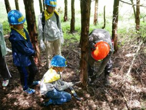 A tree thinning experience in an Oji forest in Shizuoka Prefecture. | OJI HOLDINGS CORP