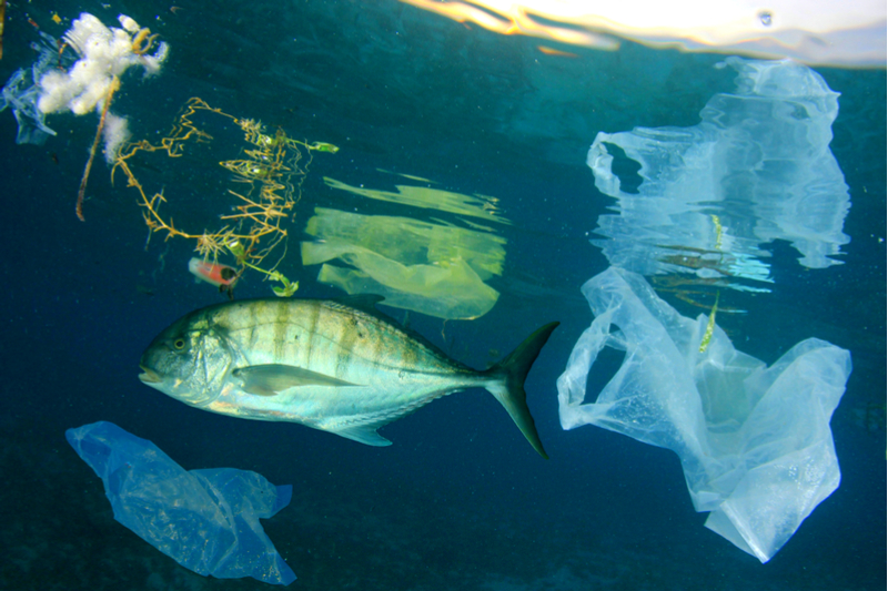 fish and plastic in the ocean
