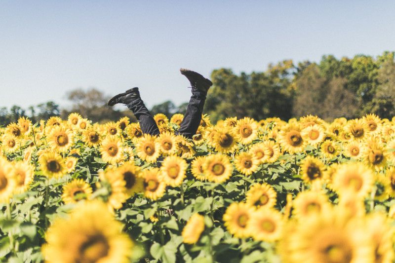 legs and sunflowers